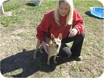 Terrier (Unknown Type, Medium) Mix Puppy for adoption in Lavon, Texas - Maxy