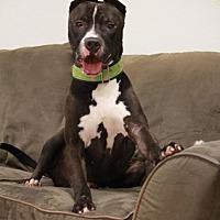 Adopt A Pet :: Cano - Brookhaven, NY