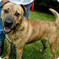 Adopt A Pet :: Brady - Anniston, AL