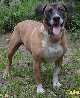 Black Mouth Cur/Hound (Unknown Type) Mix Dog for adoption in Lake Pansoffkee, Florida - Duke