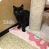 Adopt A Pet :: Eddie - Foothill Ranch, CA