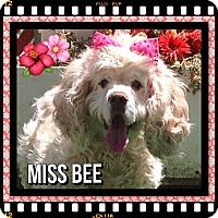Adopt A Pet :: Miss Bee - Santa Barbara, CA