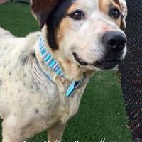 Adopt A Pet :: Brody - Land O'Lakes, FL