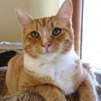 Adopt A Pet :: Arpels - Mountain Center, CA