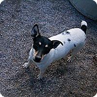 Adopt A Pet :: Dolly - Emporia, KS