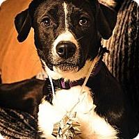 Adopt A Pet :: Jackie - Pocahontas, AR