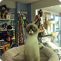 Adopt A Pet :: Clover - Memphis, TN