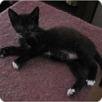 Adopt A Pet :: Norton - Morgan Hill, CA