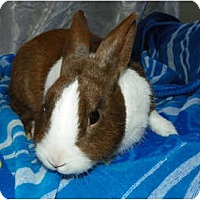Adopt A Pet :: Harvey - North Gower, ON