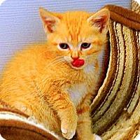 Adopt A Pet :: Bobby - Victor, NY