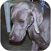 Adopt A Pet :: Gunnar  **ADOPTED** - Eustis, FL