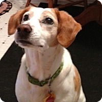 Adopt A Pet :: Princess - Indianapolis, IN