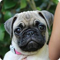 Adopt A Pet :: Salem - Pismo Beach, CA