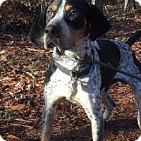 Adopt A Pet :: Miller - Brattleboro, VT