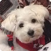 Adopt A Pet :: Teddy - La Costa, CA