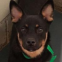 Adopt A Pet :: Jack - Fort Smith, AR
