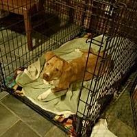 Adopt A Pet :: Hazel - Loxahatchee, FL