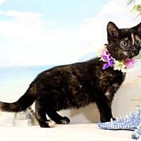 Adopt A Pet :: Wren - Harrisonburg, VA