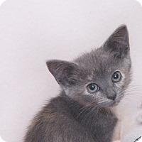 Adopt A Pet :: Booski - Thousand Oaks, CA