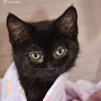 Adopt A Pet :: Jetta - Crossfield, AB