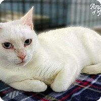 Adopt A Pet :: Vera - Roanoke, VA