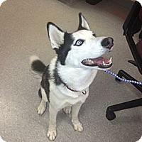 Adopt A Pet :: Luna - Hilliard, OH
