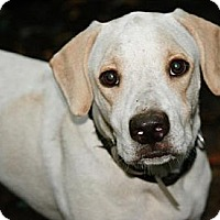 Adopt A Pet :: Lochte - Hastings, NY