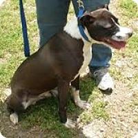 Adopt A Pet :: Dusty - Courtesy Post - Dundas, VA