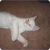 Adopt A Pet :: Danny - Davis, CA