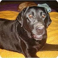 Adopt A Pet :: Romeo - North Jackson, OH
