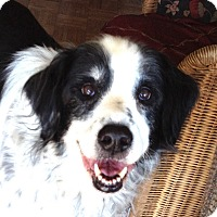 Adopt A Pet :: Shiloh - Petaluma, CA