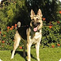 Adopt A Pet :: Chanel - Laguna Niguel, CA