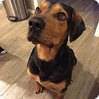 Adopt A Pet :: Buddy - Nashville, TN