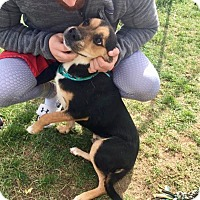 Adopt A Pet :: Oliver - ADOPTED! - Zanesville, OH