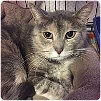 Adopt A Pet :: Whitney - Milford, MA