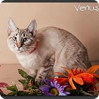 Adopt A Pet :: Venus - Gilbert, AZ