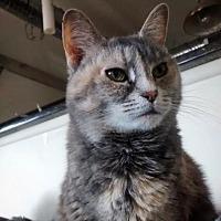 Adopt A Pet :: Maryland - New York, NY
