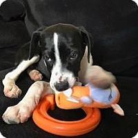 Adopt A Pet :: April - Meridian, ID