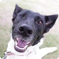 Adopt A Pet :: Mia - San Ramon, CA