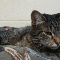 Adopt A Pet :: Sadie - Erie, PA