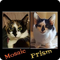 Adopt A Pet :: Mosaic     170865 - Atlanta, GA