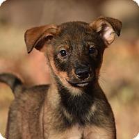 Adopt A Pet :: Zander - Rosamond, CA