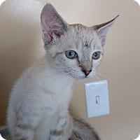 Adopt A Pet :: Titan - Armuchee, GA