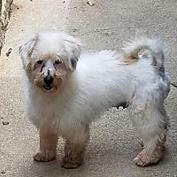 Adopt A Pet :: Bella - Alexandria, KY