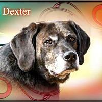 Adopt A Pet :: Dexter - New Castle, DE