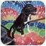 Photo 1 - Labrador Retriever Mix Dog for adoption in Trenton, New Jersey - Pippi Longstocking