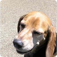 Adopt A Pet :: Pickett - Portland, OR