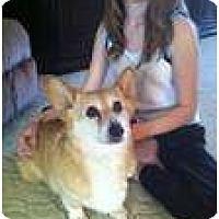 Adopt A Pet :: Glory - Inola, OK