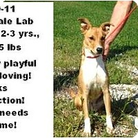 Adopt A Pet :: # 460-11 - RESCUED! - Zanesville, OH