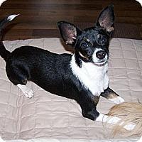 Adopt A Pet :: Maya - San Angelo, TX